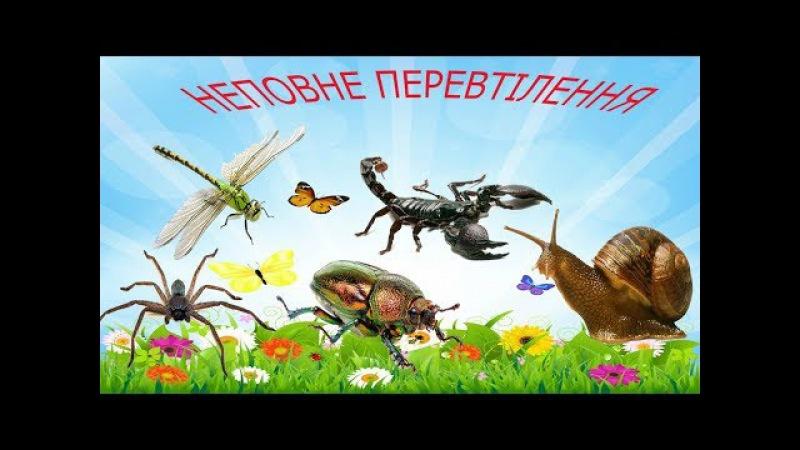 Енциклопедія для дітей. Дивовижні маленькі тварини. Неповне перетворення.