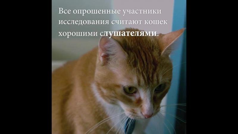 10 доказательств, что вам срочно нужна кошка!