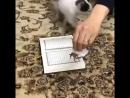 Даже кошка почтить Коран А кто мы такие чтоб не уважать Коран