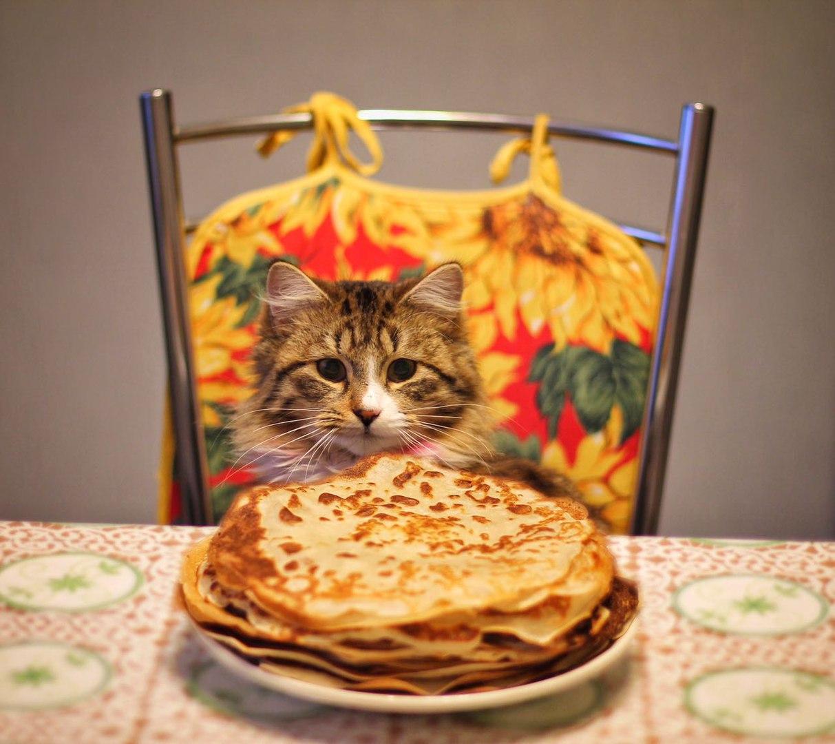 Открытка кот масленица