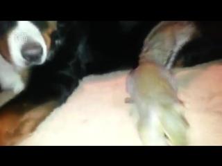 Белка прячет орехи