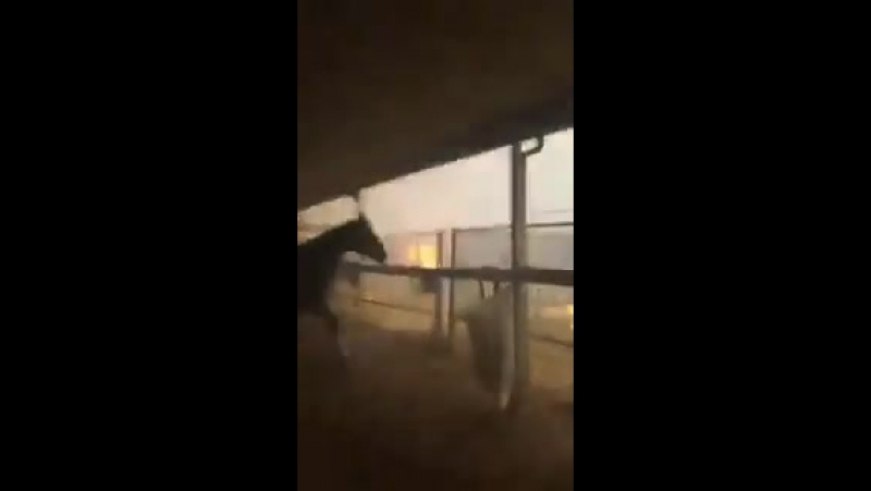 Report: California's LilacFire leads to evacuation of racehorses from San Louis Rey Downs training center