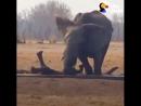 Приключения слонёнка.