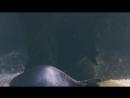 Экспозиция Реки и озера. Океанариум. Крокус Сити.