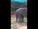 Покормили слоников
