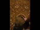 кот мутузит сабаку