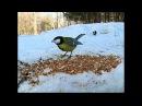 Расскажите птицы, что вас тянет в высь СТС-МИР.