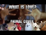 Haddaway - What Is Love (Animal Cover)