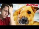 Собачка без лица TRY NOT TO CRY CHALLENGE ПОПРОБУЙ НЕ ЗАПЛАКАТЬ ЧЕЛЛЕНДЖ