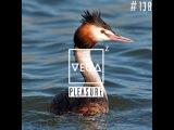 Vega Z - Pleasure 138 (02-03-2017)