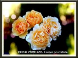 Pascal Comelade - 4 roses pour Marie