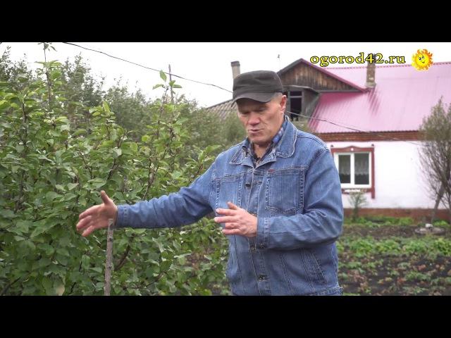 Как вырастить виноград из косточки Эксперимент.