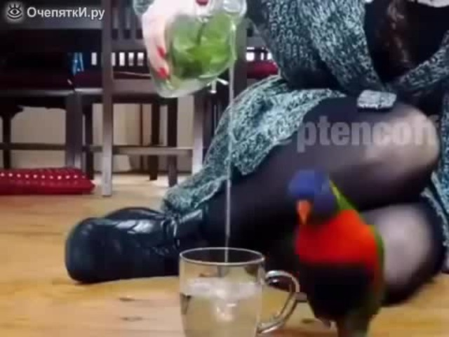 (When friends called drink