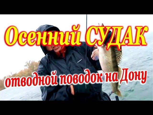 Ловля СУДАКА на ОТВОДНОЙ ПОВОДОК с лодки осенью на Дону