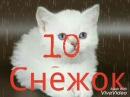 Топ 10 Котов-Воителей из Грозового племени, чьи смерти были самыми печальными.