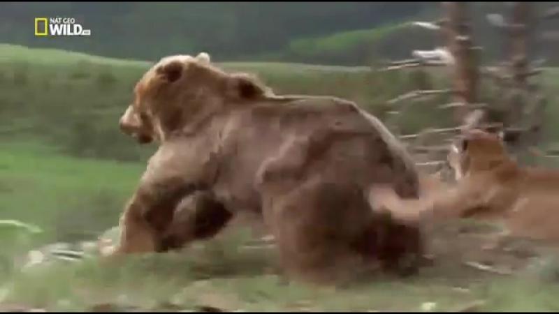 National Geographic Бойцовский клуб для животных 3