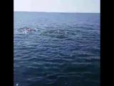 Город #Бяла #побережьеболгарии #дельфины в Чёрном море. #teremlux #Bulgaria #sea #blaksea #schwarzemeer #boat #dolphin #delphin