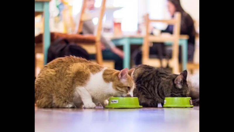 Когда наши котики обедают, хруст стоит такой, что даже чайки на набережной вздрагивают. 😸 Хотите застать их трапезу? Приходите к