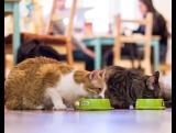 Когда наши котики обедают, хруст стоит такой, что даже чайки на набережной вздрагивают. ?Хотите застать их трапезу? Приходите к