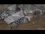 Флешбэк (VHS Video)