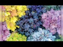 Цветы в саду, которые можно не поливать