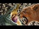 Фильм о жизни львов. Приключения в Африке. проживотных фильм