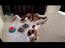 Смешные кошки приколы про кошек и котов 2017Коты и огурцы Funny cats
