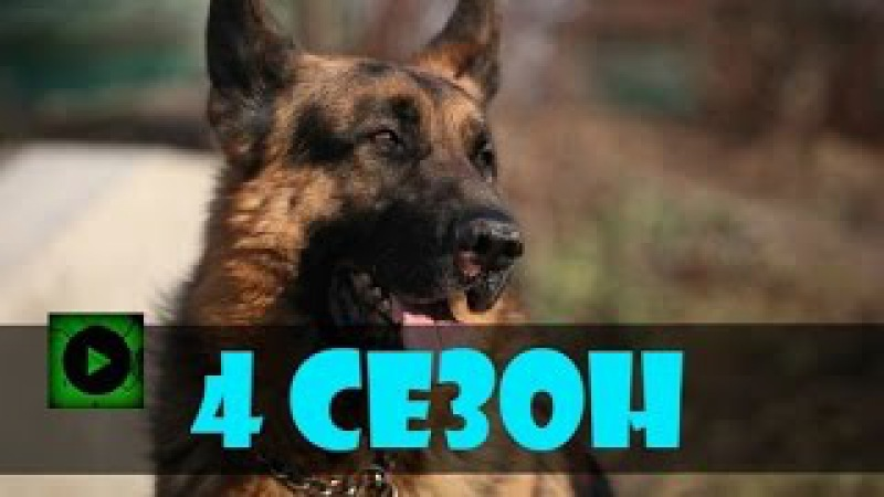 Новогодний Пёс новогодние серии смотреть онлайн