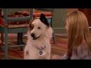 Собака точка ком - Все серии подряд (Сезон 1 Серии 10,11,12) l Комедийный сериал Disney