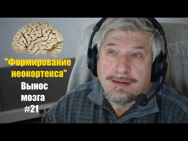 Формирование неокортекса Сергей Савельев Вынос мозга 21 смотреть онлайн без регистрации