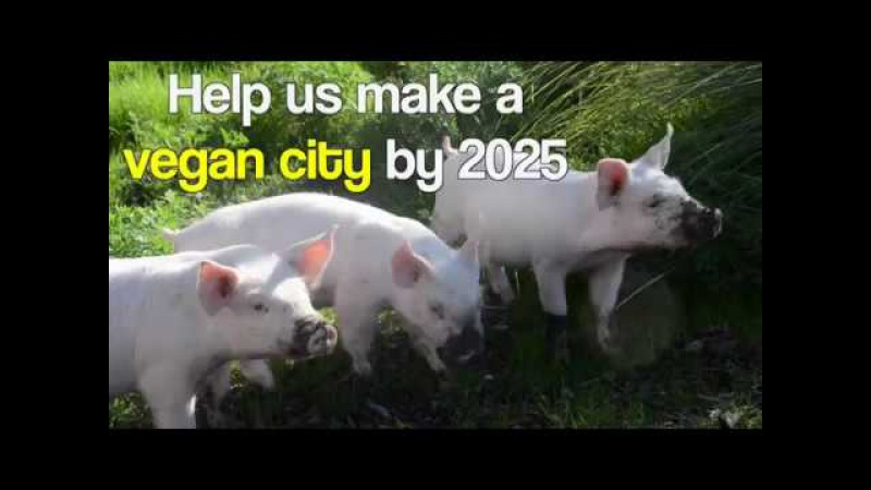 The Compassionate Cities Campaign