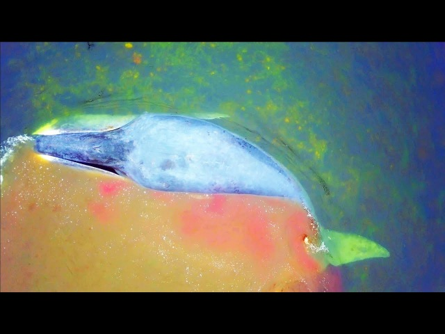 Спасли Кита на Шантарских Островах