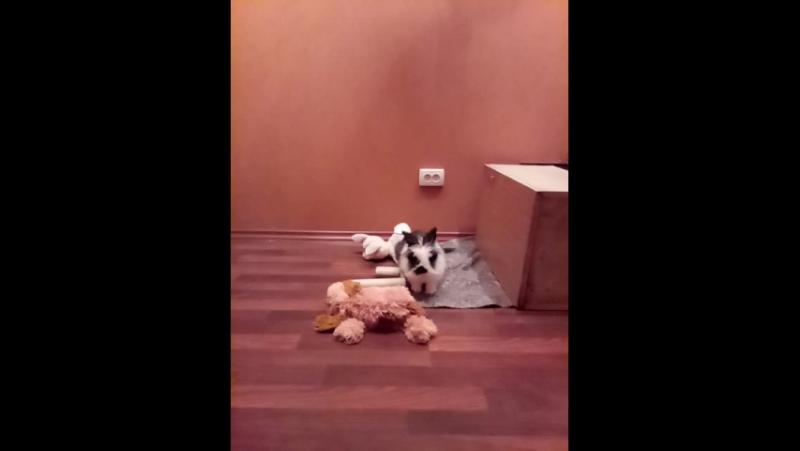 Дрессированный кролик Бусиан , команда Бусь Бусевич , означает прыжок))!!