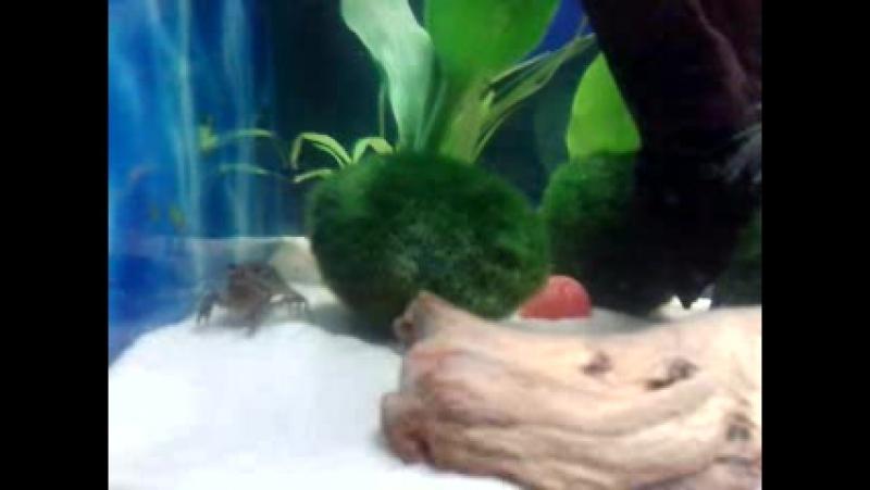 Мой самый красивый аквариум