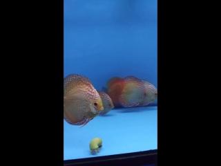 короли аквариума