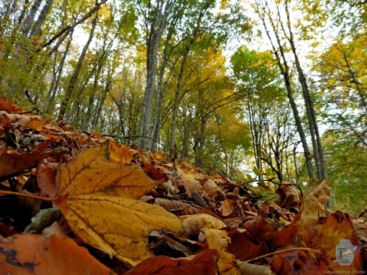 Золотая осень в окрестностях ЧИБИЯ! Выходные Удались!