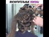 Иметь бы еще такие волосы! Как тебе идея?