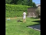 Коно против собачки