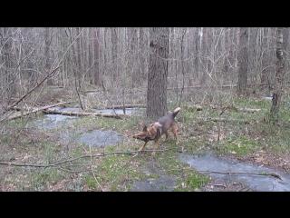 Хорошо в лесу не только Жозефине :-)