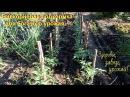 Супер подкормка для хорошего урожая томатов и всех растений