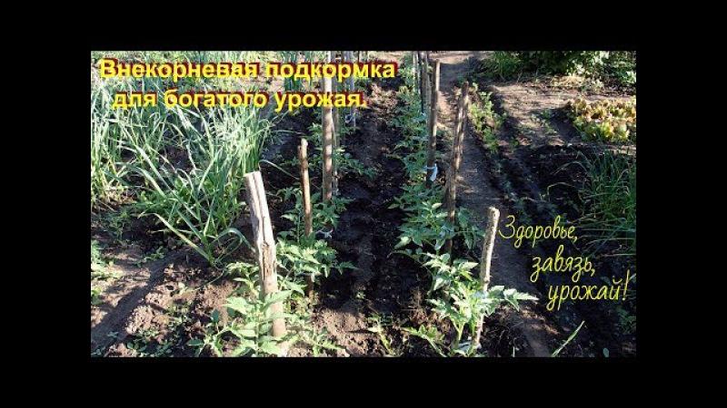 Супер подкормка для хорошего урожая томатов и всех растений.