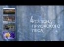 4 сезона Приокского леса Приокско Террасный заповедник