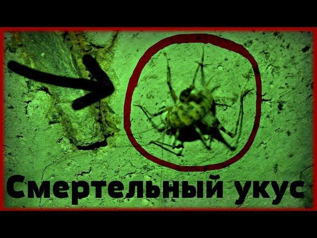 Тайны Подземелья 1 (НАПАЛИ МУТАНТЫ, ПОГИБЛИ ЛЮДИ, ЖЕСТЬ)