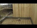 30.08 - 11.09.2016 Внутренняя отделка и утепление потолка бани