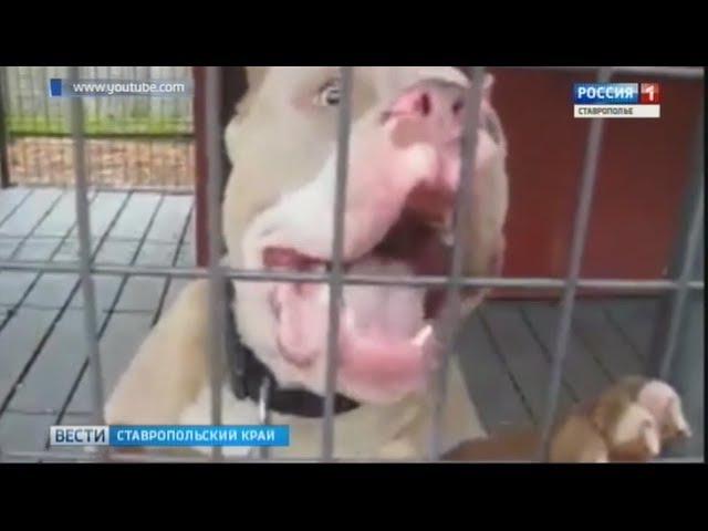 Двухлетнюю девочку загрызла собака