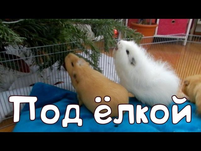 ♥Три поросёнка под ёлкой♥ Guinea pigs love Christmas tree♥