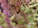 Эти загадочные животные BBC Weird Nature 6 'nb pfufljxyst bdjnyst bbc weird nature 6