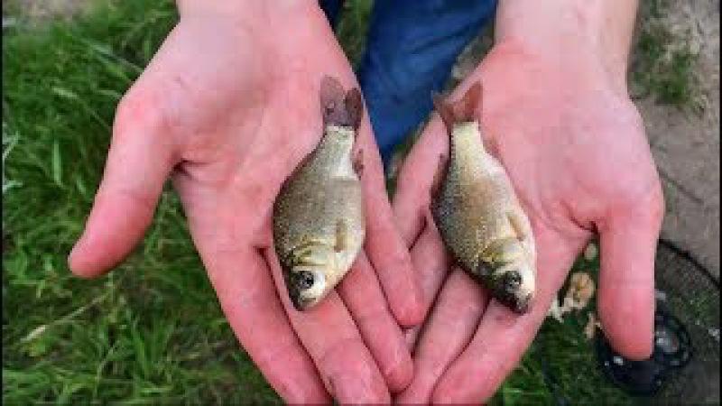 5 уловистых самодельных ловушек для рыбы5 inventive DIY fish trap