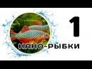 Нано-рыбки. Часть 1