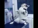 Кот круто танцует